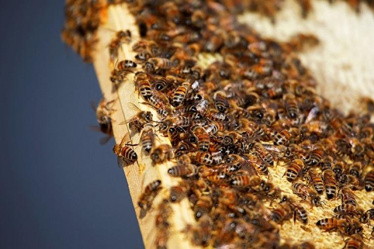 images/mod_vina_slicebox_image_slider/samples/bees_vs.jpg